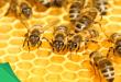 cấu trúc tổ ong